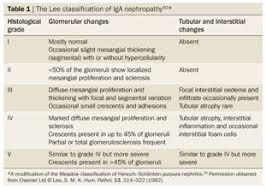 academic onefile document pathology of iga nephropathy