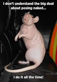 Rat Meme - dark thoughts flower my hairless rat
