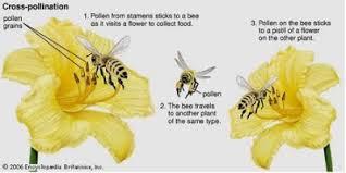 Reproduction In Flowering Plants - 9 4 reproduction in plants sl hl 1 biology 5 ferguson