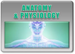 Human Anatomy And Physiology Courses Online Free Online Human Anatomy Course Online Anatomy Class With Lab
