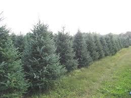 landscaping trees run tree farm