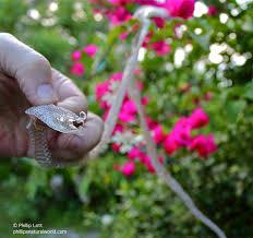 snake skins and stars phillip u0027s natural world