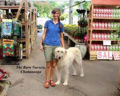 sunday afternoon at the barn nursery chattanooga tn i 24 at the