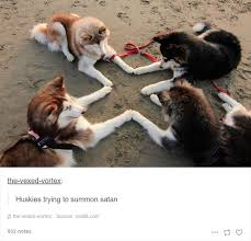 Funny Husky Memes - 10 of the most hilarious posts about huskies ever bored panda