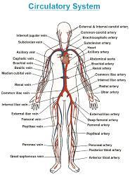 doctors directory india human anatomy