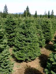 Pacific Northwest Christmas Tree Association - our growers u2014 oregon christmas tree grower association
