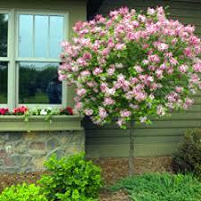 compact flowering shrubs home decorating interior design bath