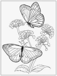 butterfly coloring pages for adults coloring page image within of