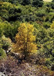 texas native plants landscaping texas native plants database