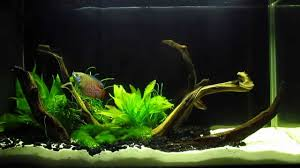 Aquascaping With Driftwood Fluval Spec V 5 Gallon Aquascape Planted Desk Tank With Red Fire