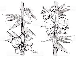 hand drawn illustration with bamboo stalk and orchid sketch vector