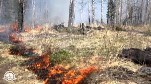 Wildfire Parks Canada by Banff National Park Earth Air Prescribed Fire And Water A