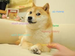 Doge Meme Best - understand the doge meme in 7 short steps the barkpost