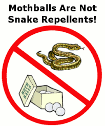 How To Avoid Snakes In Backyard Snakes In And Around The House