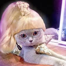 Kitten Halloween Costumes Pet 34 Pets Wigs Images Animals Funny Animals