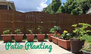 Plants For Patio by Tomato Plants For Your Patio And Other Plant Picks