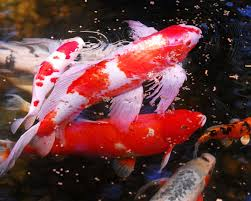 best 25 pictures of fish ideas on pinterest pretty fish photos