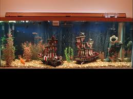 it s time to start thinking about aquascaping theming our 60