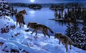 imagenes de fondo de pantalla lobos 966 lobo fondos de pantalla hd fondos de escritorio wallpaper abyss