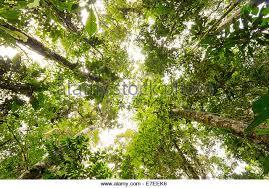canopy amazon amazon rainforest canopy stock photos amazon rainforest canopy