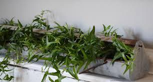 live indoor plants thrift my house live indoor plants