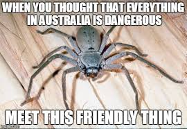 Friendly Spider Memes Image Memes - spiders imgflip