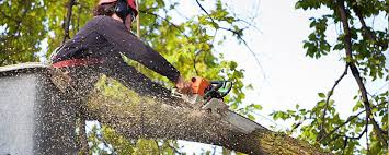how to become a tree surgeon ucas progress ucas