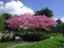 flowering trees for south florida