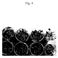 Methods Of Controlling Plant Diseases - patent ep1719410a1 method of controlling plant disease damage by