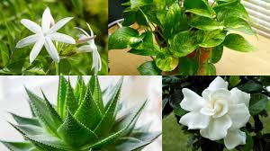 bedroom plants 8 plants to keep in your bedroom for better sleep youtube