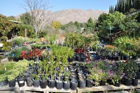 ucr today nearly 10 000 plants for sale