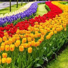 klm travel guide 7 million spring flowers in keukenhof