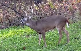 Deer Ground Blind Plans How Wind Affects Deer Movement And Your Hunting Deer U0026 Deer