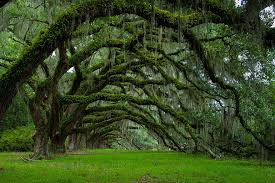 16 of the most magnificent trees in the