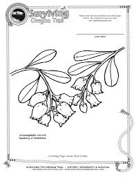 free coloring page flowers bearberry kinniknnick surviving the