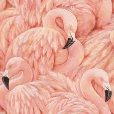 wallpaper with pink flamingos pink flamingos birds wallpaper australia as seen on big brother