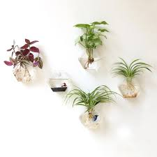 Wall Hanging Planters by Glass Hanging Planters Promotion Shop For Promotional Glass