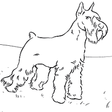 coloring pages favorite dog breed
