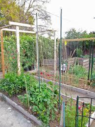 andie u0027s way trellis ideas for tomatoes cucumbers beans peas