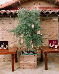 wedding wishes new chapter 92 best wedding olive tree images on olive branches
