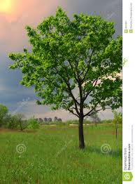 big tree and small city stock image image of 2819907