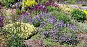 drought tolerant native plants seeking native drought tolerant plants u0026 grasses to remake my