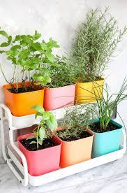 herb garden outdoor that grow in countryside network indoor light