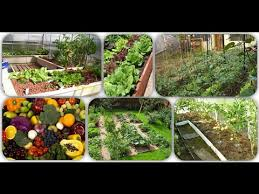 how to start a garden in your backyard from scratch how to garden