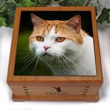 cat urn cat urn