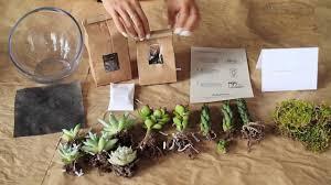 what u0027s in a diy succulent terrarium kit from juicykits com youtube