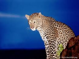 sle resume journalist position in kzn wildlife cing 46 best it s time for africa images on pinterest animals