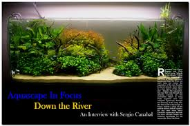 Aquarium Aquascapes Aquascaping World Magazine Down The River