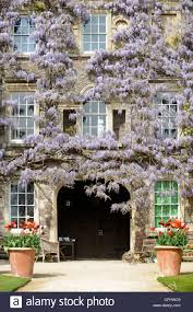 wisteria sinensis blends with a climbing rose at hanham court