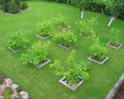 Best Orchard Design Ideas On Pinterest Tree Deck Treehouse - Backyard orchard design